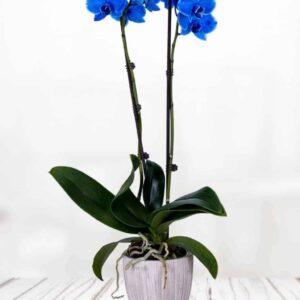 evergreen-florist-galway