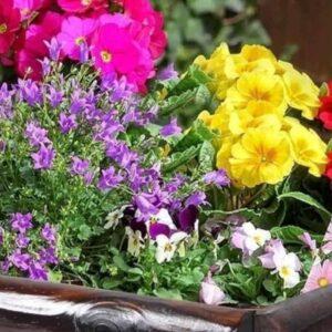 mixed-spring-planter